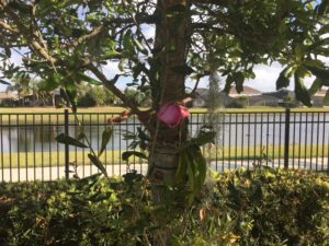 Orquídea, símbolo da mudança floresceu!