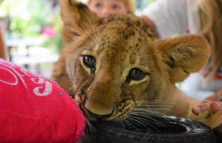 Zoológico de animais resgatados