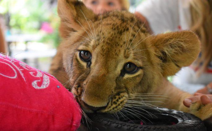 zoologico de animais resgatados