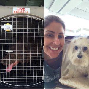 Cachorros no avião!