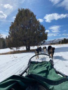 Dog sledding: conhece?